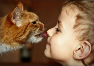 О кошках_1