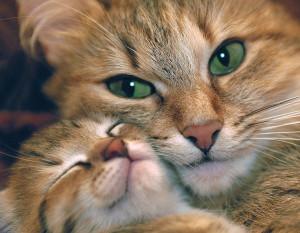 О кошках_2