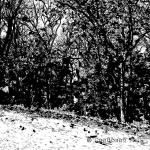 1.57.Linoleum-Engraving-74-150x150