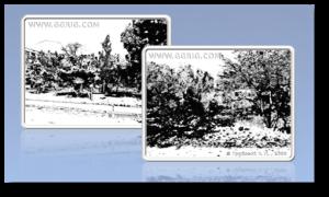 portfolio-linoleum-engraving-11_2