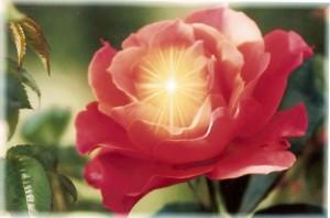 Душа в цветке_1